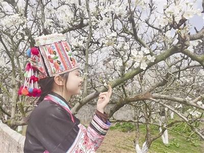 """来广南珠街看春天的""""雪"""""""