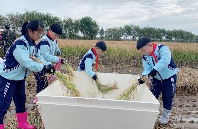 河北乐亭:劳动教育开展有声有色